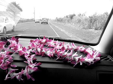aloha pink lei