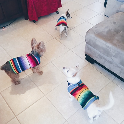 baja ponchos dog mexican blanket