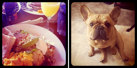 brunch the mission - french bulldog