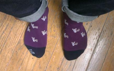 corgi socks charles ballestamon