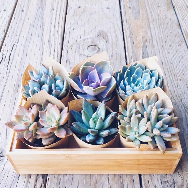 succulent housewarming gift