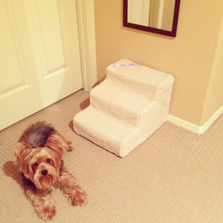 doggy stairs