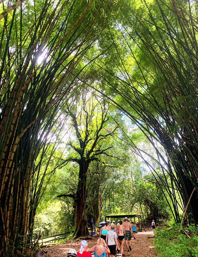 kauai backcountry adventures bamboo grove