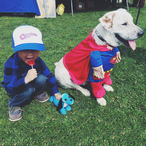 san diego humane society - walk for animals - paws in the park - beckham superman dog