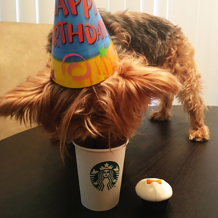 birthday puppuccino and pupcake