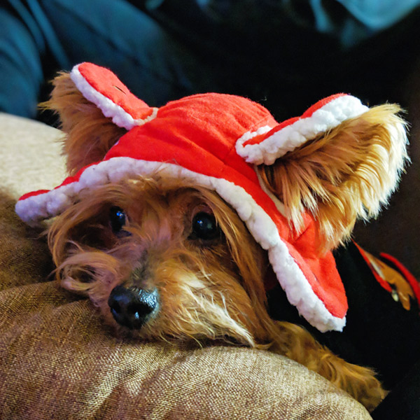 rocky puppy hat