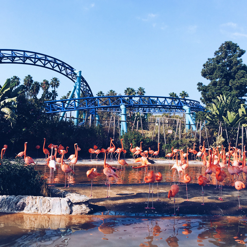 sea world flamingos