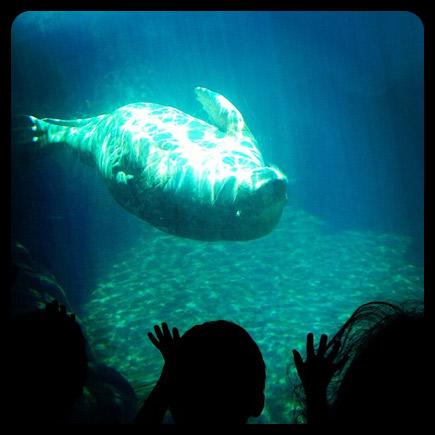 seaworld walrus aquarium